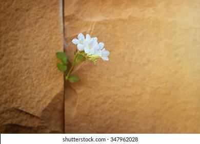 white flower growing on crack stone wall, soft focus, warm color tone, blank text