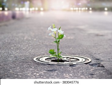 white flower growing on crack street, soft focus, filtered effect