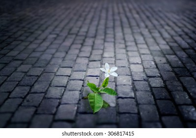 white flower growing on street floor old brick at night, soft focus