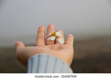 white flower in hand on the mist background.