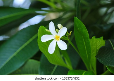 white flower hd photo. white with green background hd image