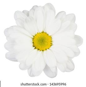 White flower isolated on white