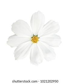 White flower isolated on white background.