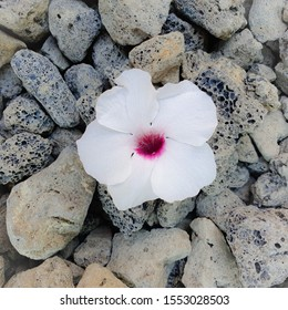 A white flower laying amongst the harsh black rocks