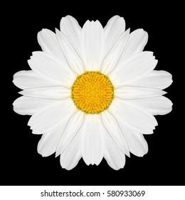 White Flower Mandala. Kaleidoscopic design Isolated on Black Background. Mirrored pattern