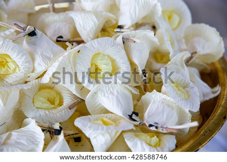 White flower mourn over persons death stock photo edit now white flower for mourn over a persons death in thais traditional mightylinksfo