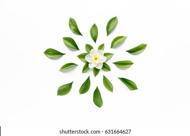 White flower narcissus, chamomiles buds, branches and leaves isolated on white background. lay flat, top view