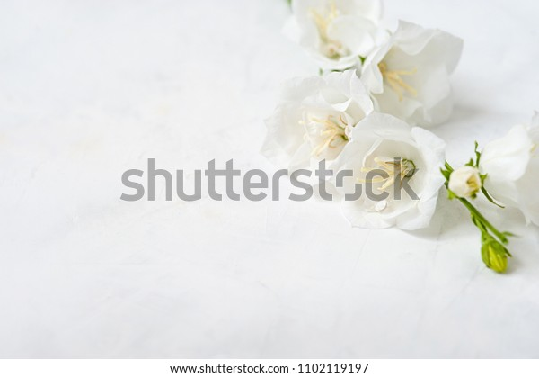 White flower on a white background. White flower close-up wedding abstract background