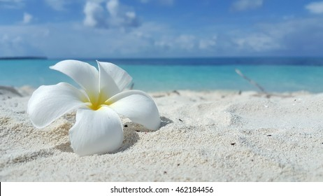 white flower on the beach and sea background