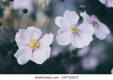 White flower on dark blue background. Autumn mystery photo with cold colors