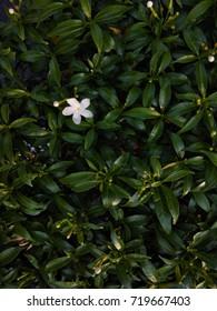 White flower on the leaves