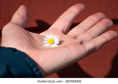 White flower on a palm on the brown background