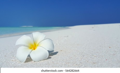 White flower on the white sandy beach and sea with blue sky background