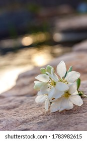 white flower on the sandy shores of the Mediterranean Sea in Israel. Space for text. Idea for decorative artwork