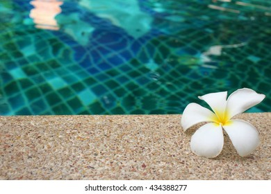 White flower with the pool