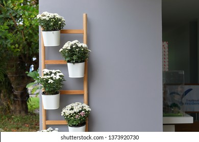 white flower in pot plant hanging wooden jack ladder decoration on gray wall