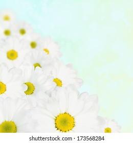 White flower spring background