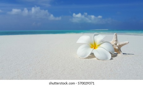 white flower and starfish on the white sand beach with copy space