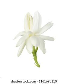White flower, Thai jasmine flower  isolated on white background.