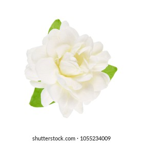 White flower, Thai jasmine with leaf isolated on white background.