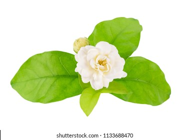 White flower, Thai jasmine with leaf isolated on white background, Top view.