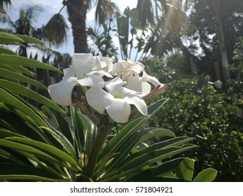 White flower thriving in the heat