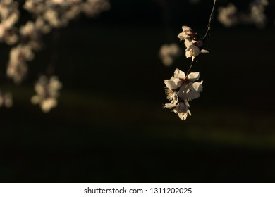 white flower tree closeup