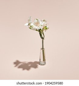 White flower and vase minimal summer or spring still life on pastel pink background. Sunlight, hard shadow. Wedding, party fashion concept