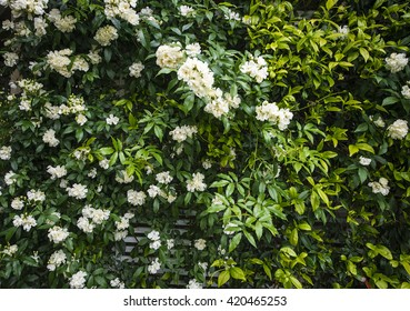 White flower wall