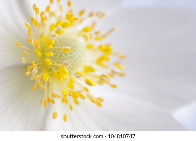 White flowers with yellow in middle images stock photos vectors white flower with yellow middle close up mightylinksfo