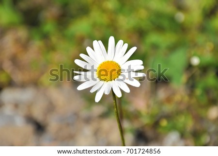 White flower yellow middle forrest nice stock photo edit now white flower with the yellow in the middle in the forrest in the nice summer day mightylinksfo