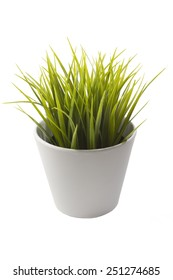 White flowerpot with beautiful and fresh green plant.