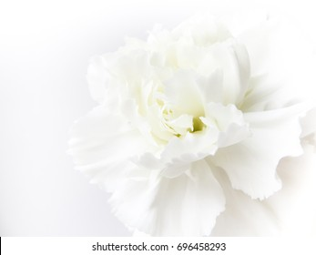 White flowers background images stock photos vectors shutterstock white flowers background macro of white petals texture soft dreamy image mightylinksfo
