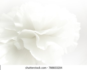 Flower background images stock photos vectors shutterstock white flowers background macro of white petals texture soft dreamy image mightylinksfo