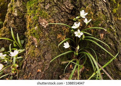 White flowers at the base of a tree.  St. Mary's River State Park, Leonardtown, MD, USA.