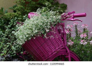 White flowers in a basket