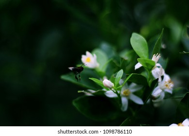 White flowers meaning images stock photos vectors shutterstock white flowers are beautiful and with meaning of their own mightylinksfo