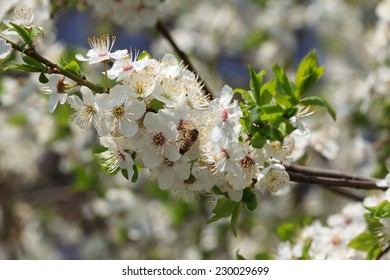 White flowers blooming on tree branch