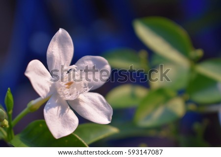 White flowers called tip serpen whit stock photo edit now white flowers called tip serpen whit green leaf mightylinksfo