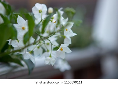 white flowers in focus
