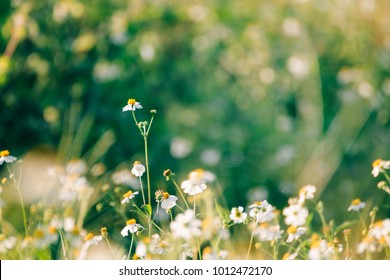 White flowers with grass background