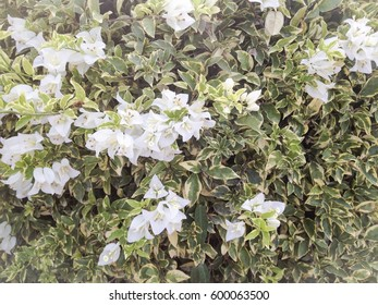 White flowers and green leave