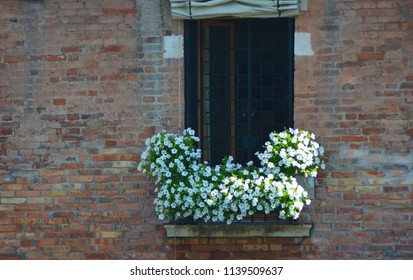 White flowers with green leaves overflow a window box. The window has a patterned black iron screen. The wall is of terracotta-coloured bricks.
