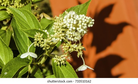 White flowers with green stems and their shadows on red background
