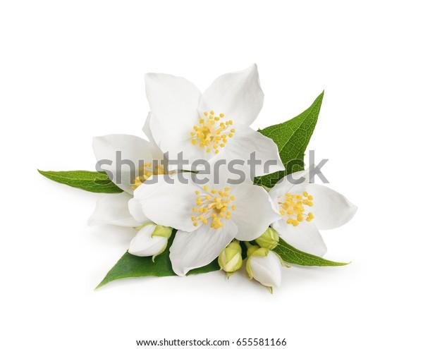 Белые цветы жасмина на белом изолированном фоне
