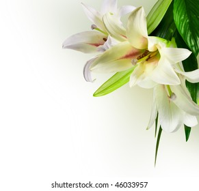 white flowers lily with green leaf on white