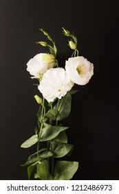 White flowers of Lisianthus on the dark background. vertical