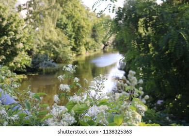 White flowers with a lush green river scenery in the background.