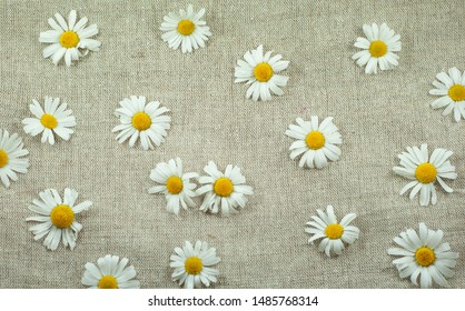White flowers of moon  daisy on a flax background