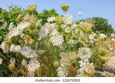 White flowers moving in wind